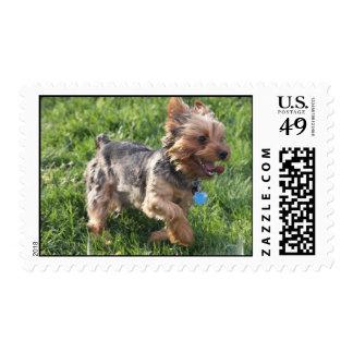 Sello del perro de York Terrier
