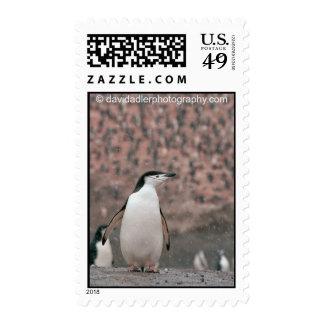 Sello del pingüino de Chinstrap