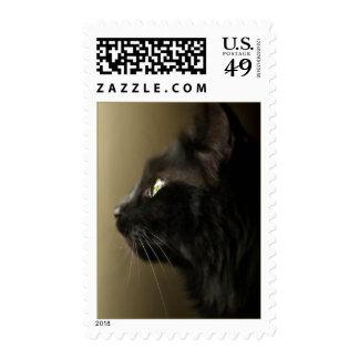 Sello del retrato del gato negro