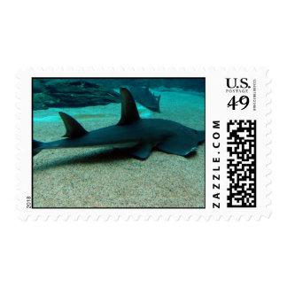 Sello del tiburón de arena