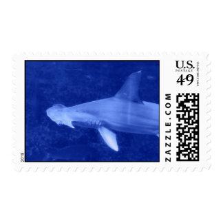 Sello del tiburón de Hammerhead
