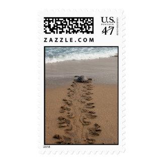Sello del viaje de la tortuga de Hawksbill
