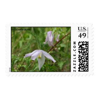 Sello del Wildflower del Clematis púrpura