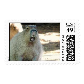 Sello divertido del Capybara