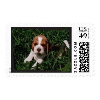Sello divertido lindo del beagle