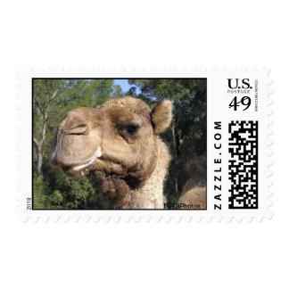 Sello Drooling del camello