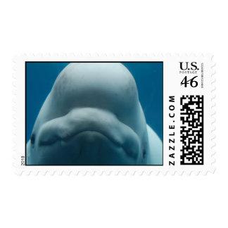 Sello dulce de la ballena de la beluga