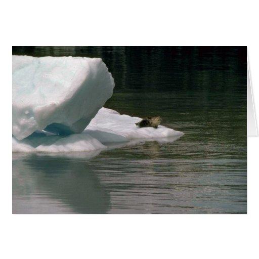 Sello en flujo del hielo tarjeton