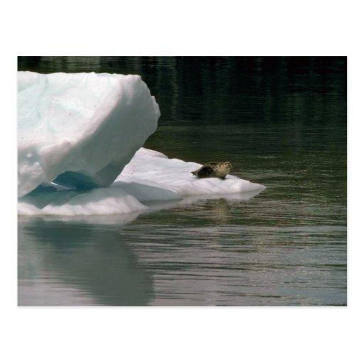 Sello en flujo del hielo postal