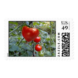 SELLO en forma de corazón de USPS del tomate