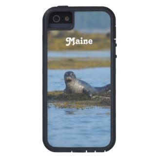 Sello en la bahía Maine de Casco iPhone 5 Fundas