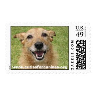 sello feliz del perro de Cuties para los colmillos