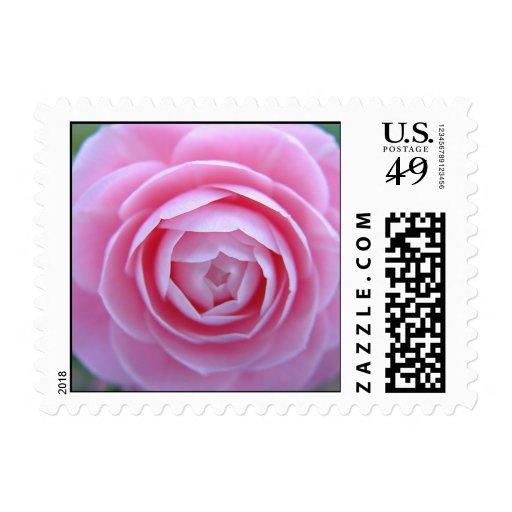 Sello floral de la camelia suave rosada del paraís