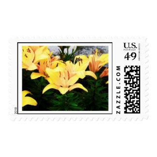 sello florecido amarillo bonito