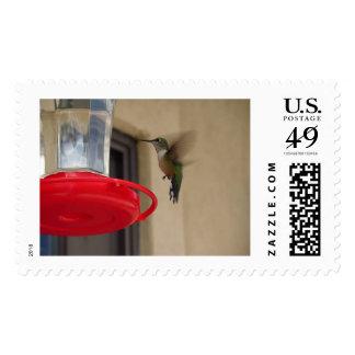 Sello grande del pájaro del tarareo de Colorado