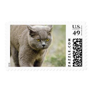 Sello gris de vagabundeo del gato