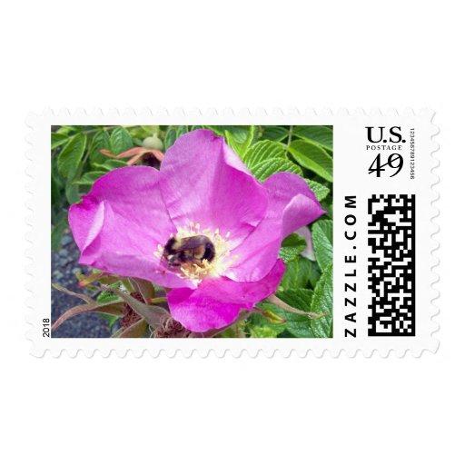 Sello hermoso de la abeja