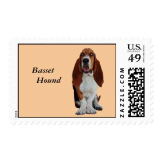 Sello hermoso de la foto del perro de Basset Hound