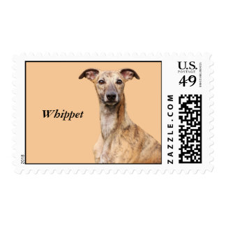 Sello hermoso de la foto del perro de Whippet