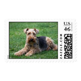 Sello hermoso de la foto del perro del terrier gal