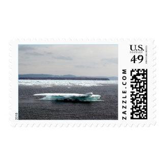 Sello hermoso del iceberg
