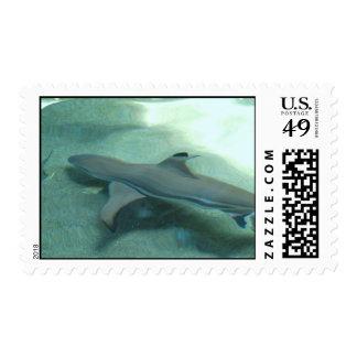 Sello inclinado negro del tiburón