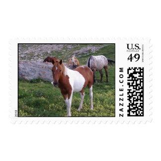 Sello indio del caballo del potro