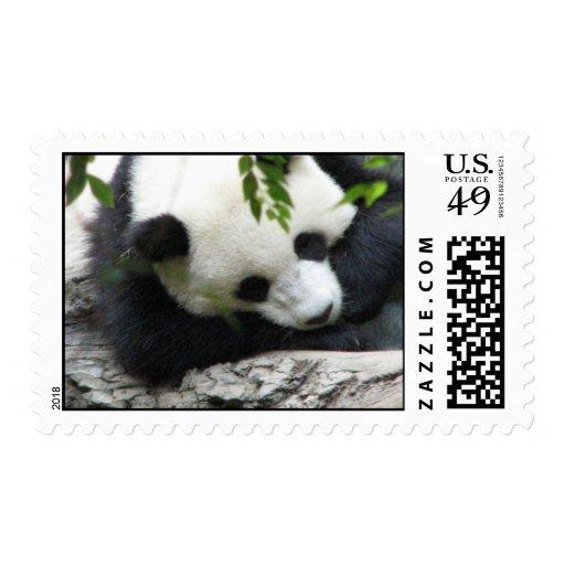 Sello lindo de la panda