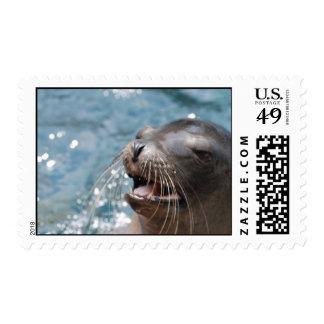 Sello lindo del león marino