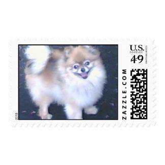 Sello lindo del perrito Pomeranian