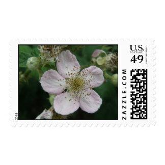 Sello macro de la flor de Blackberry