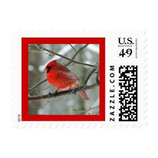 Sello (masculino) cardinal rojo brillante