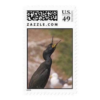 Sello necked largo del pájaro de la pelusa