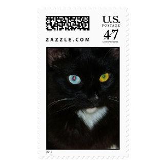 Sello observado impar magnífico del gato negro