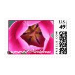 Sello postal de la flor rosada