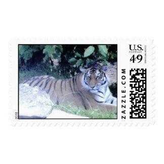 Sello postal del tigre
