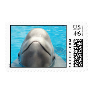 Sello presumido de la ballena de la beluga