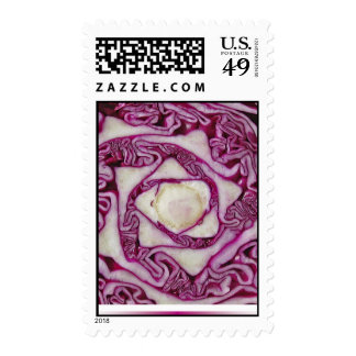 sello púrpura de la col