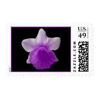 Sello púrpura de los E.E.U.U. del narciso del gote