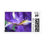 Sello púrpura del iris