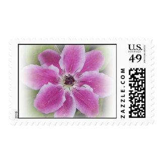 Sello radiante de la flor del Clematis
