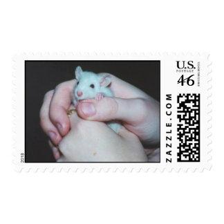 Sello Rata del bebé envuelta por una caricia cari
