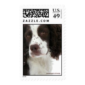 "Sello ""real"" de los E.E.U.U. del perro de aguas de"
