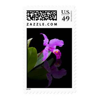 Sello reflejado de la orquídea de la belleza