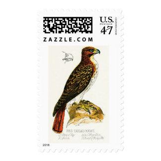 Sello Rojo-Atado del halcón