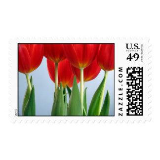 Sello rojo del tulipán