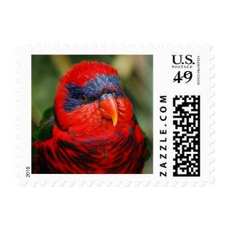 Sello rojo tropical del pájaro
