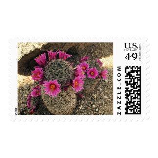 Sello rosado de la flor del cactus