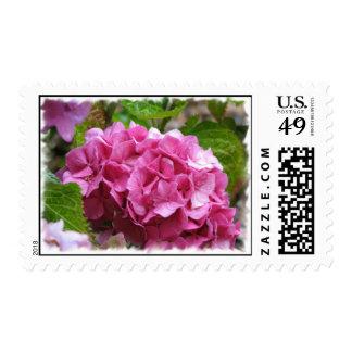 Sello rosado de la flor del Hydrangea