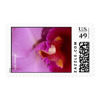 Sello rosado de la orquídea de Cattleya